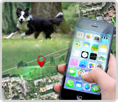 page features - Smart GPS and QR Code Pet Tags