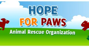Hope for Paws - Ruby Cavalier King Charles