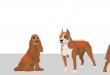 service-dog-vest-sizing-chart1