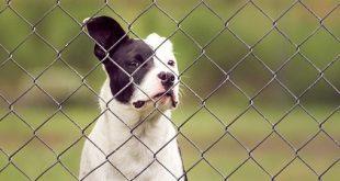 best wireless dog fence 310x165 - True facts on how a wireless dog fence works