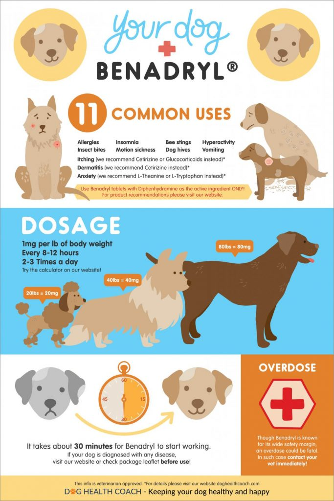 Benadryl for dogs infographic Pinterest 1200x18001 683x1024 - How Much Benadryl for a Dog