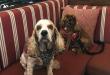 dogfriendlyrestaurant