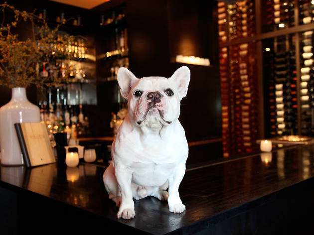image1 - Best Dog-Friendly Restaurants in the USA