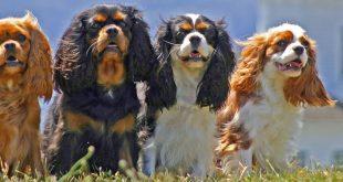 d80605d2 44d6 4c46 9f97 a2316a3edf69 resized1 310x165 - Can Dogs See Color?