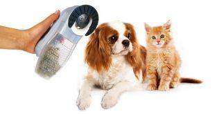 cavalier vacuum 4 310x165 - Best Vacuums for Dog Hair