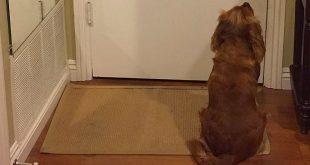pottytrain 310x165 - How to Potty Train a Puppy