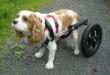 eddies_wheels