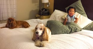 19535522 832134693630828 2128796889540198400 n 310x165 - 7 Tips To Stay In Hotels With Your Dog