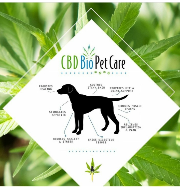 20191028 170038 - CBD Oil for Pet Anxiety – Weed Biscuits & Edibles for Dogs, Cats & Horses