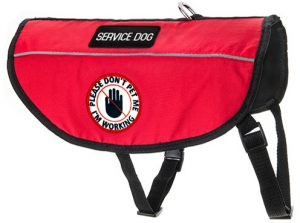 Service Dog Vest Online1 e1476242041453 300x223 - Cavalier King Charles, One of the Best Therapy Service Dogs