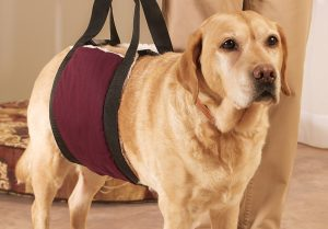 Lift Assist Harness for Dogs