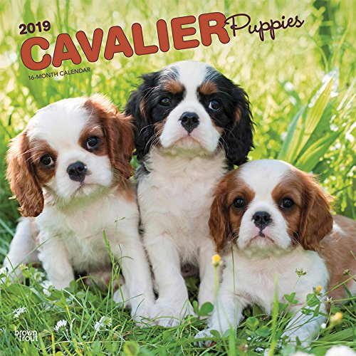 Cavalier King Charles Spaniel Puppies 2019 12 x 12 Inch Monthly Square Wall Calendar, Animals Dog Breeds Puppies