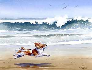 """Cavalier King Charles Spaniel at the Beach"" Oversized 11 x 14 Watercolor Cavalier King Charles Spaniel Art Print Signed by Artist DJ Rogers"