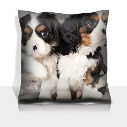 MSD Throw Pillowcase Polyester Satin Comfortable Decorative Soft Pillow Covers Protector sofa 16×16, 1pack IMAGE ID: 12195227 Litter of Cavalier King Charles spaniel puppies on gray background