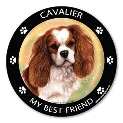 Cavalier King Charles Cocker Spaniel My Best Friend Magnet