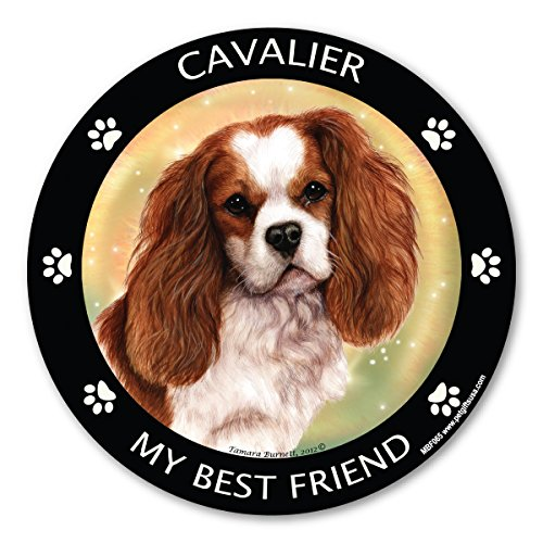 Cavalier King Charles Cocker Spaniel My Best Friend Magnet