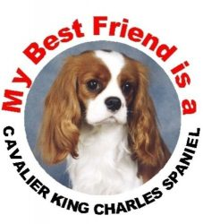 2 x Cavalier King Charles Spaniel (Blenheim) Dog Car Window Stickers