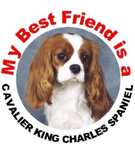 2 x Cavalier King Charles Spaniel (Blenheim) Dog Car Window Stickers
