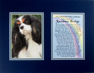 Cavalier King Charles Spaniel Rainbow Bridge Bereavement Memorial Keepsake Wall Hanging Gift Made in the USA