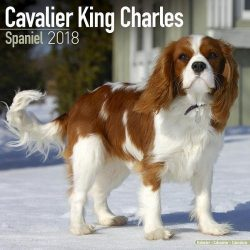 Cavalier King Charles Calendar – Dog Breed Calendars – 2017 – 2018 wall Calendars – 16 Month by Avonside