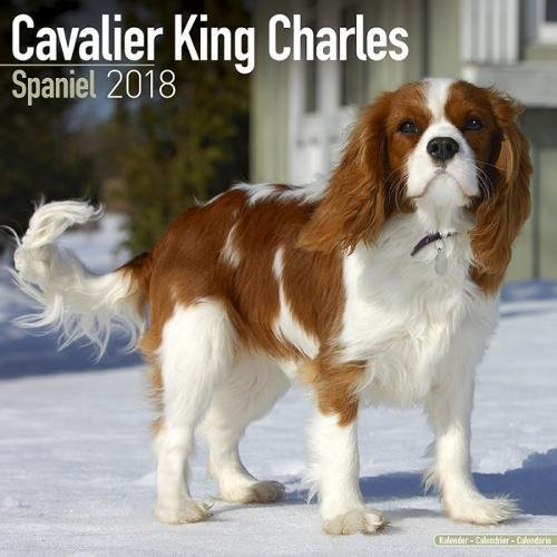 Cavalier King Charles Calendar – Dog Breed Calendars – 2017 – 2018 wall Calendars – 16 Month by Avonside