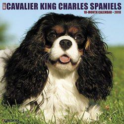 Just Cavalier King Charles Spaniels 2018 Calendar