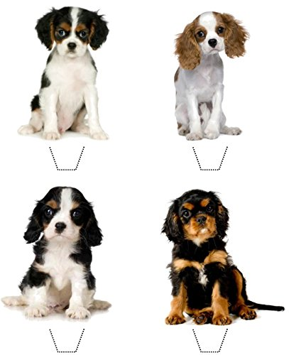 Novelty Cavalier King Charles Spaniel Puppy Mix 12 Edible Stand Up wafer paper toppers (5 – 10 BUSINESS DAYS DELIVERY FROM UK)