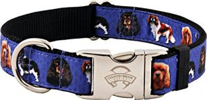 Country Brook Design Premium Cavalier King Charles Ribbon Dog Collar – Medium