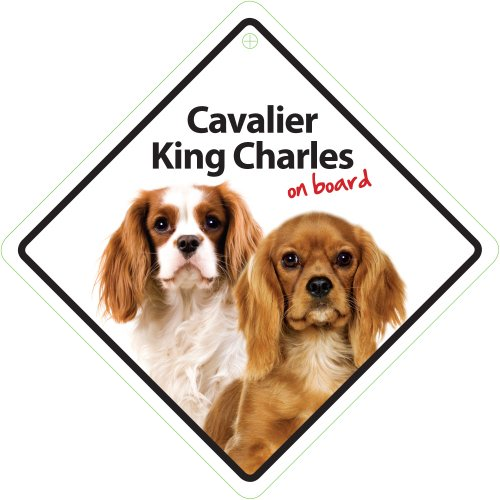 Cavalier King Charles on Board Plastic Sign
