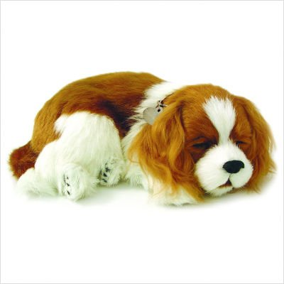 Cavalier King Charles Puppy by Perfect Petzzz