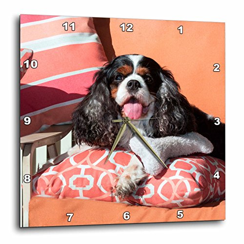 3dRose Danita Delimont – Dogs – Cavalier lying on pillows, MR – 15×15 Wall Clock (dpp_258241_3)