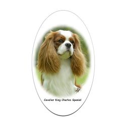 CafePress – Cavalier King Charles Spaniel 9F97D-19 Sticker (Ov – Oval Bumper Sticker, Euro Oval Car Decal