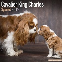 Cavalier King Charles Calendar – Dog Breed Calendars – 2018 – 2019 Wall Calendars – 16 Month by Avonside