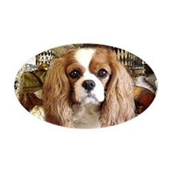 CafePress Cavalier King Charles Spani Sticker Oval Bumper Sticker, Euro Oval Car Decal