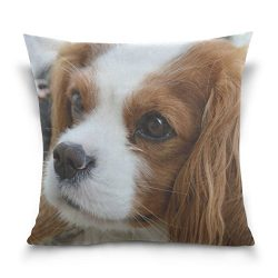 Hokkien Blue Viper Cute Cavalier King Charles Spaniel Decorative Square Throw Pillow Case Cushion Cover for Sofa Bedroom Car Double-Sided Design 18 x 18 inch