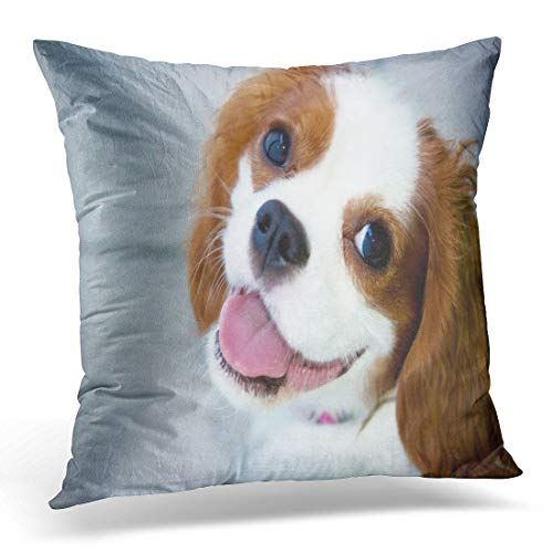 Emvency Throw Pillow Cover Brown Cavalier Portrait of Blenheim King Charles Spaniel White Decorative Pillow Case Home Decor Square 18″ x 18″ Pillowcase