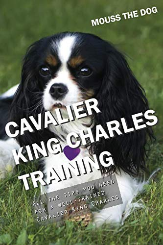 CAVALIER KING CHARLES TRAINING: All the tips you need for a well-trained Cavalier King Charles