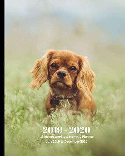 2019 – 2020 | 18 Month Weekly & Monthly Planner July 2019 to December 2020: Cavalier King Charles Spaniel Dog Pets Canine Vol  3Monthly Calendar with … Holidays- Calendar in Review/Notes 8 x 10 in.