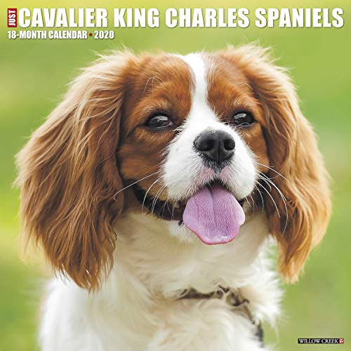 Just Cavalier King Charles Spaniels 2020 Wall Calendar (Dog Breed Calendar)