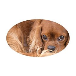 CafePress Sweet Friend Ruby Cavalier King Cha Oval Bumper Sticker, Euro Oval Car Decal