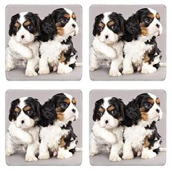MSD Drink Coasters 4 Piece Set Image ID: 12195227 Litter of Cavalier King Charles spaniel puppies on gray backgrou