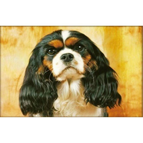 Peyan Cavalier King Charles Spaniel Animal 5D Diamond Painting Kits Full Drill Crystal DIY Wall Sticker 3D Diamond Mosaic Cross Stitch Embroidery 18×14 inches
