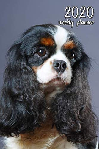2020 Weekly Planner: 6″ x 9″ in. Cavalier King Charles Spaniel 52 Weekly  Calendar Schedule Organizer Appointment Journal Notebook for Spaniel fans