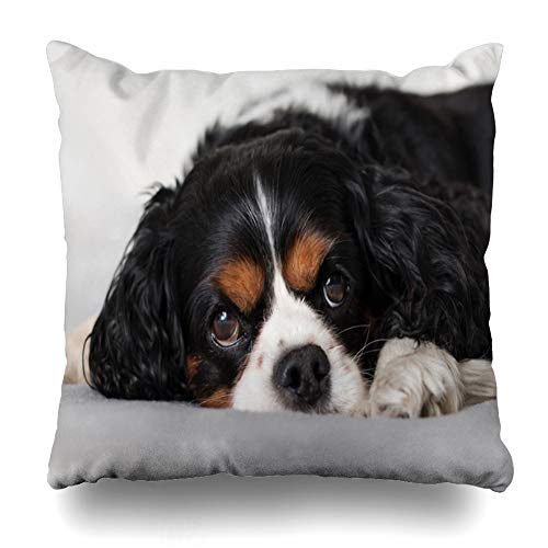 Ahawoso Throw Pillow Cover Pillowcase Square 16×16 Cavalier King Black Charles Tired Spaniel Young Camera Laying On Beautiful Animals Eyes Wildlife Decorative Cushion Case Home Decor Pillowslip
