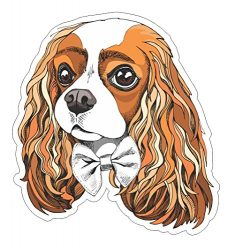 Cavalier King Charles Spaniel portrait Vinyl Bumper Sticker Decal Dog Family Pet Love